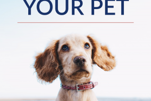 Traveling in general can get expensive, but traveling with pets can be even more costly. So, here are some of the most frugal ways to travel with your pet.
