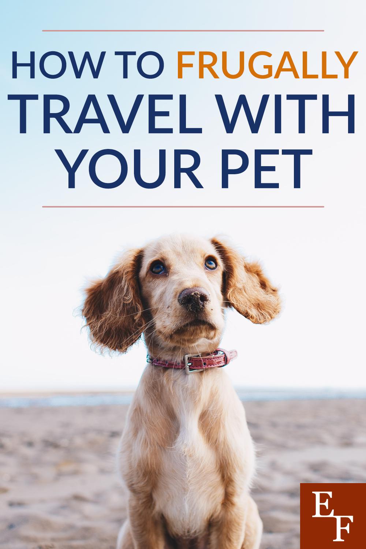 Como viajar frugalmente com seu animal de estimação 1